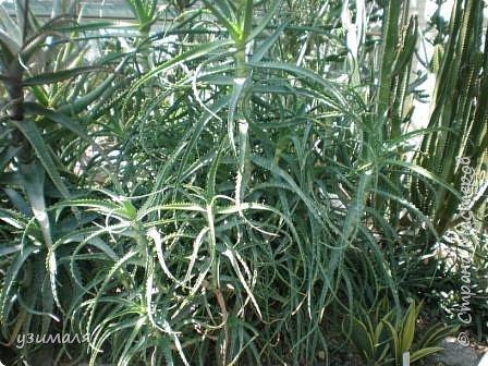 Растения пустыни фото 3