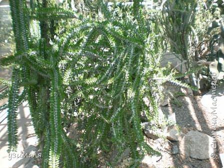 Растения пустыни фото 4