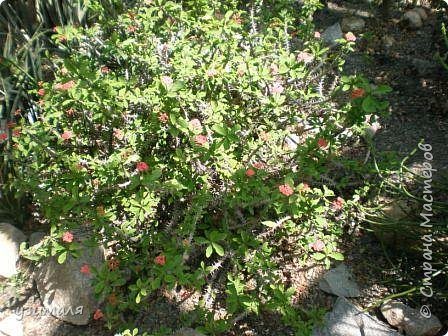 Растения пустыни фото 7