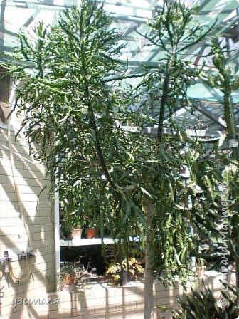 Растения пустыни фото 8