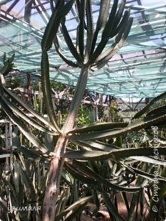 Растения пустыни фото 9