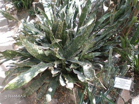 Растения пустыни фото 10