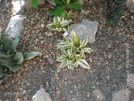 Растения пустыни фото 12
