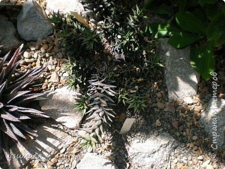 Растения пустыни фото 13