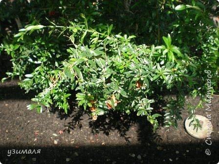Тропические цветы фото 7