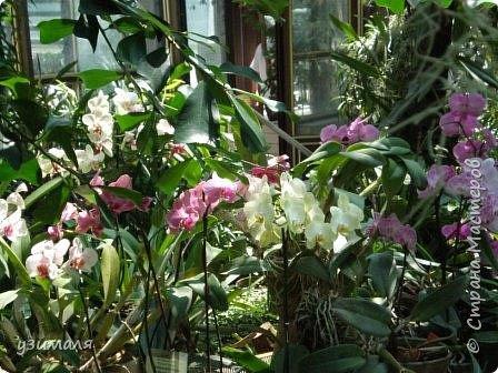 Сад орхидей фото 3