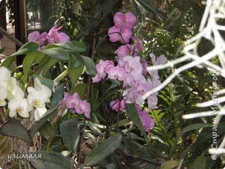 Сад орхидей фото 5