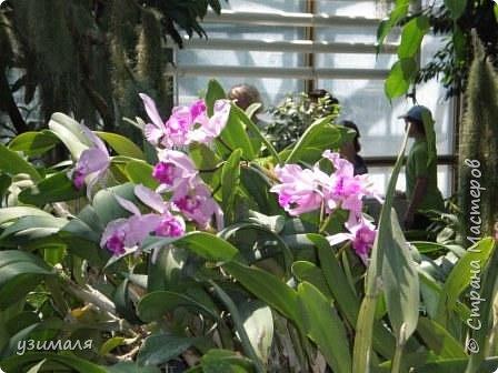 Сад орхидей фото 6