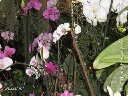 Сад орхидей фото 9