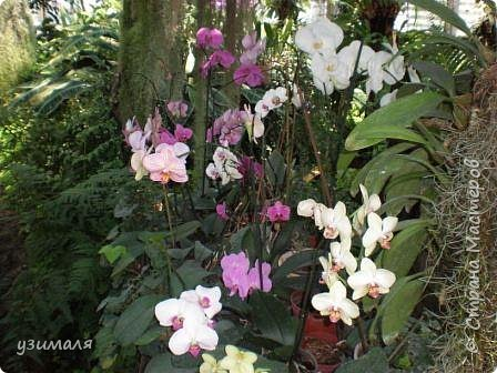 Сад орхидей фото 10