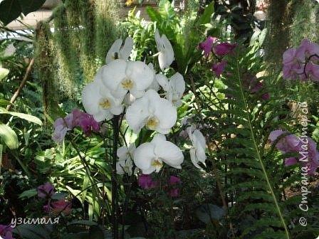 Сад орхидей фото 11