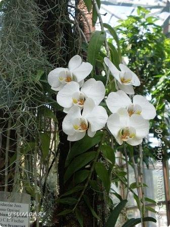 Сад орхидей фото 17