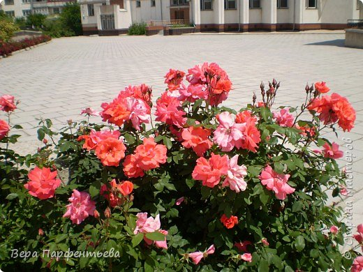 На территории школы фото 3