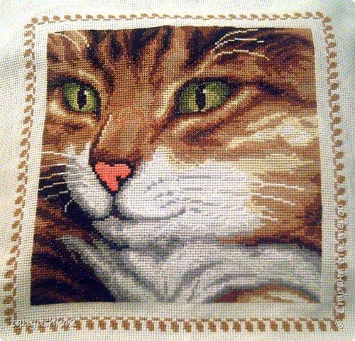 Вышивка крестом: Кот