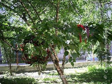 У природы наступила праздничная неделя - Зеленые святки. А у березки именины. Наряжали мы березки в своем парке у гимназии. фото 1