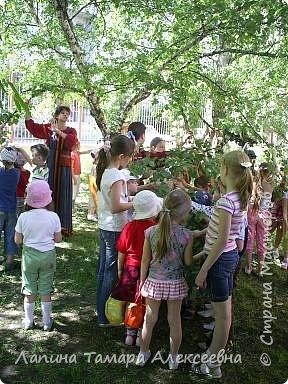 У природы наступила праздничная неделя - Зеленые святки. А у березки именины. Наряжали мы березки в своем парке у гимназии. фото 3