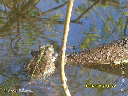 это наши лягушки фото 1
