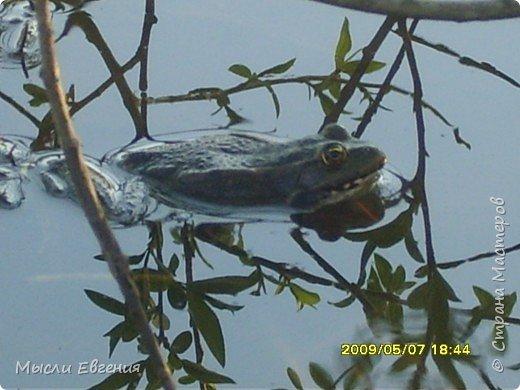 это наши лягушки фото 2