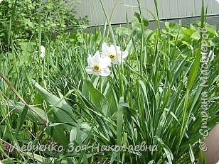 Весна шагает по нашему парку. фото 2