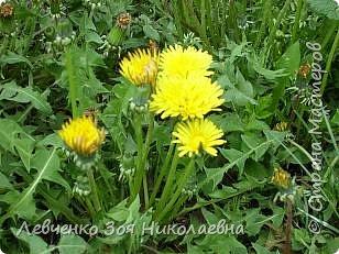 Весна шагает по нашему парку. фото 10