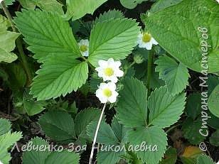 Весна шагает по нашему парку. фото 13