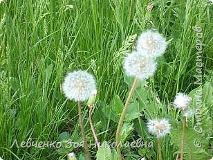 Весна шагает по нашему парку. фото 15
