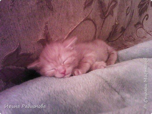 спокойной ночи.......кошки! фото 9