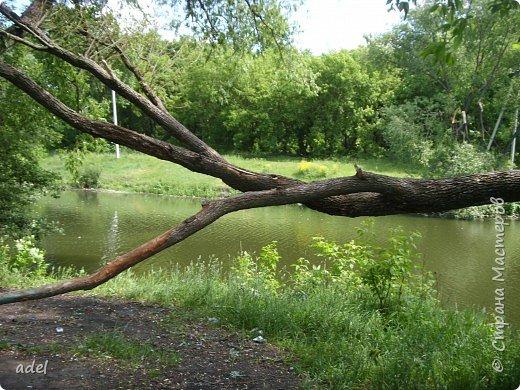 Река такая разная,в один и тот же момент времени.То голубая... фото 3