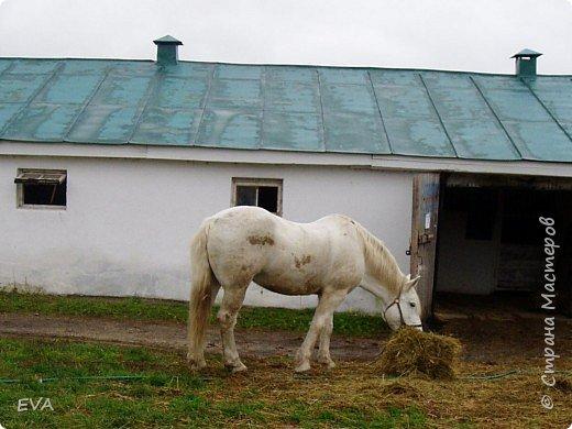 Танюшка в Велегоже. фото 7
