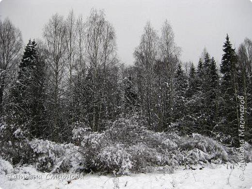 Из мест заповедных (следы на снегу)