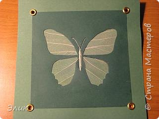 Аппликация: Бабочка фото 1