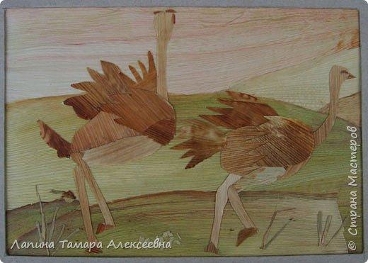 Фантазии на тему птиц из разнообразного материала фото 5