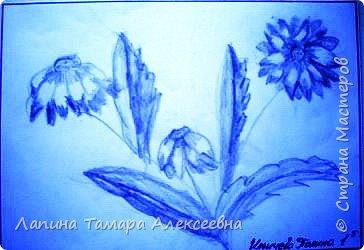 Цветы простым карандашом фото 2