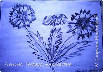 Цветы простым карандашом фото 4