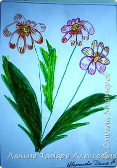 Цветы фломастерами  фото 2