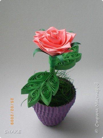 Квиллинг: Цветики-цветочки фото 2