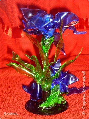 Голубой цветок фото 4