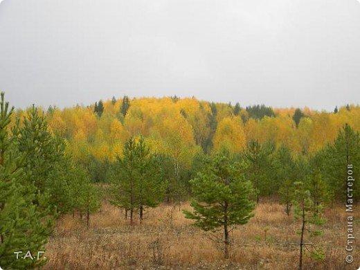 Хотела показать краски осени, но фотографии не грузятся. И я решила представить то что получилось. Снимки сделаны в сентябре. Кстати, осень этого года скупа на урожай. Ягод практически не было. Грибов не много, да еще дождь. фото 1
