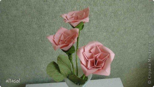 Мы решили, что это роза. Хотя в описании - пион. фото 1