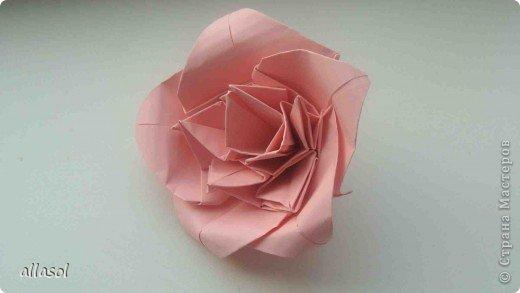 Мы решили, что это роза. Хотя в описании - пион. фото 13