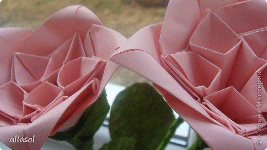 Мы решили, что это роза. Хотя в описании - пион. фото 18