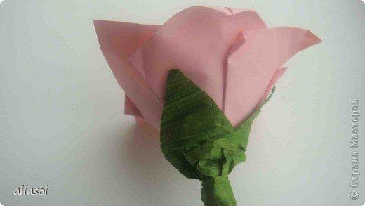 Мы решили, что это роза. Хотя в описании - пион. фото 16