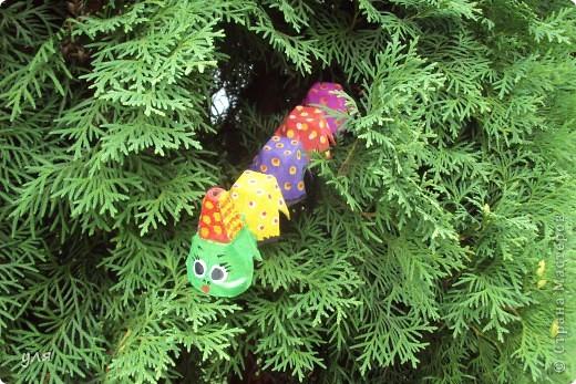 Гусеничка фото 2