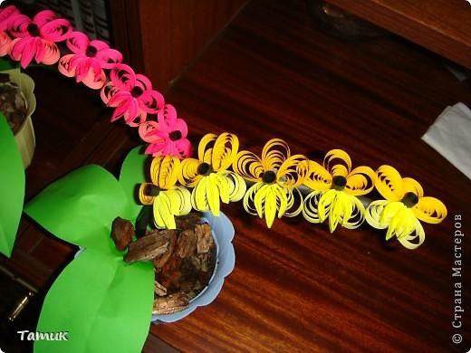 Орхидея 4 фото 4