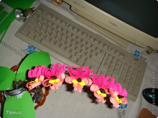 Орхидея 4 фото 2