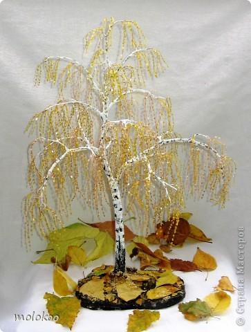 Осень... берёза фото 1
