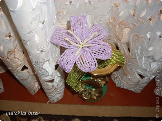 мои лилии ко дню учителя фото 2