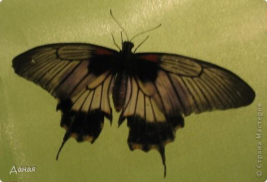 В субботу у нас в городе шел первый снег и было весьма прохладно. Но мы с сыном решили подарить себе кусочек лета, отправившись на выставку тропических бабочек. Я ожидала, что мы увидим замученных созданий в стеклянных коробках. Но мы попали в маленькую комнатку, в которой бабочки  летали... фото 1