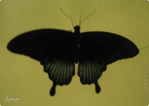 В субботу у нас в городе шел первый снег и было весьма прохладно. Но мы с сыном решили подарить себе кусочек лета, отправившись на выставку тропических бабочек. Я ожидала, что мы увидим замученных созданий в стеклянных коробках. Но мы попали в маленькую комнатку, в которой бабочки  летали... фото 7