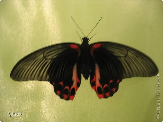 В субботу у нас в городе шел первый снег и было весьма прохладно. Но мы с сыном решили подарить себе кусочек лета, отправившись на выставку тропических бабочек. Я ожидала, что мы увидим замученных созданий в стеклянных коробках. Но мы попали в маленькую комнатку, в которой бабочки  летали... фото 11